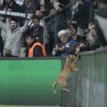 Mèo được chọn là cầu thủ hay nhất trận Champions League