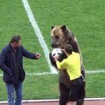 Gấu xuất hiện trên sân bóng ở Nga